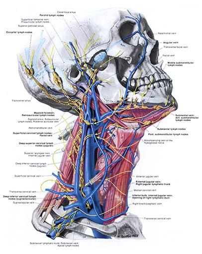 Anatomie des menschen uni koln