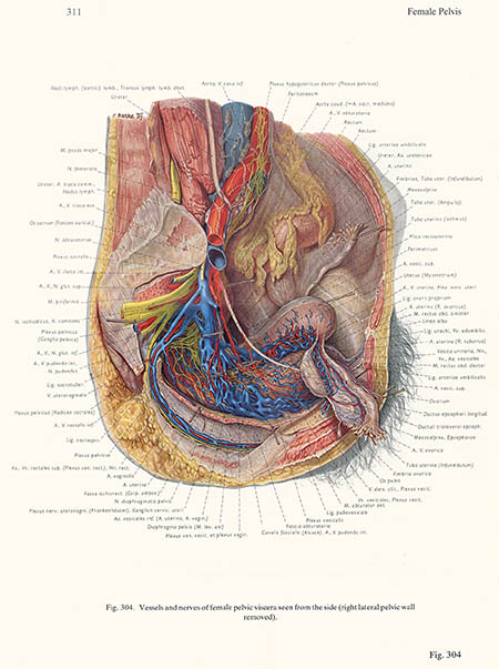 Vessels and nerves of the female pelvis, Franz Batke, click for larger image