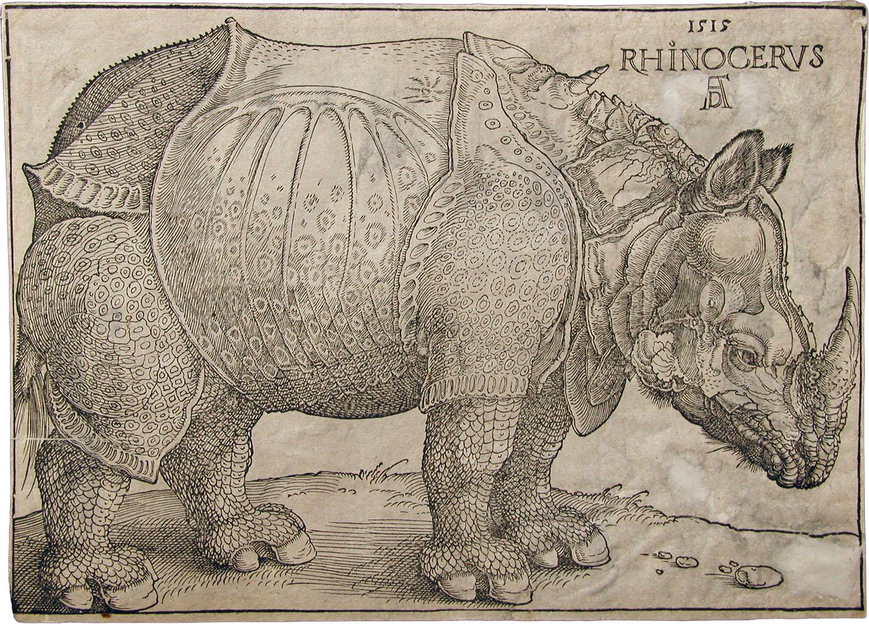 Rhinocerus Dürer